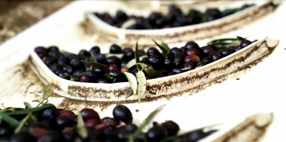 Gömeç Şubesi - Zeytin ve Zeytinyağı İşleme Tesisi